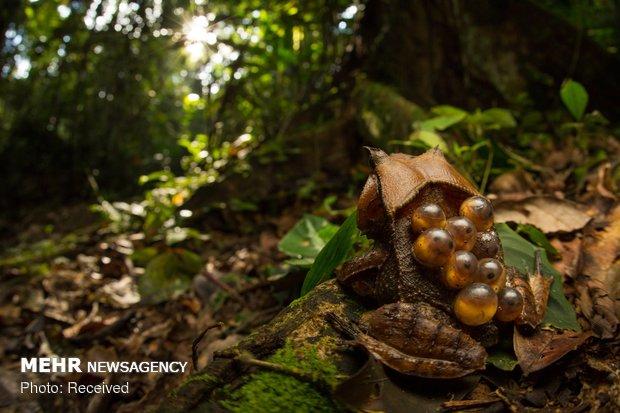 برندگان مسابقه عکاس سال استرالیا