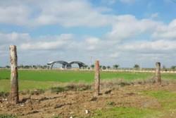 ۲۱ درخت چنار برای احداث دوربرگردان جابجا می شود