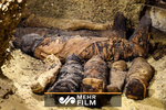 VIDEO: Dozens of mummies discovered in Egypt