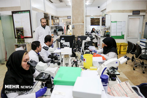Iranian researchers planning to grow human pancreas