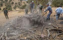 ۹۵ درصد کورههای زغال در کرمانشاه تخریب شده است