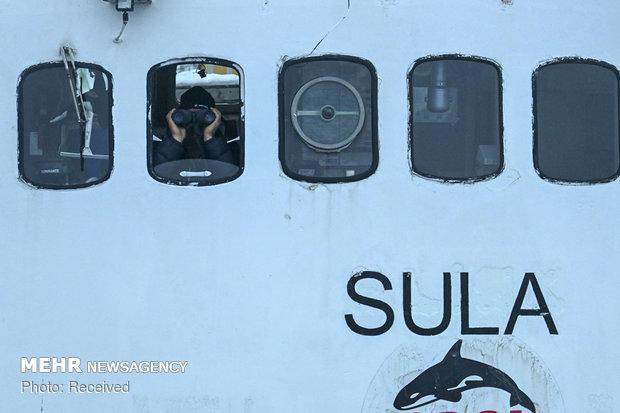 شنا با نهنگ های قاتل در آبهای نروژ