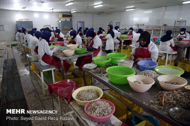 کارآفرینی جانباز تربتیان استان خوزستان شهرستان خرمشهر