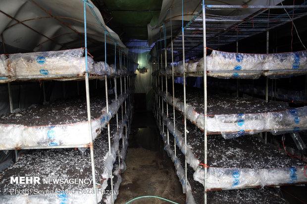 تولید و اشتغال در شرکت آبزی در احمدآباد مستوفی