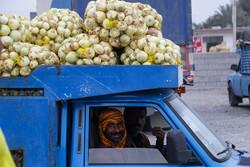 پیاز ۲روز دیگر ارزان می شود/تعطیلی میادین میوه، دلیل افزایش قیمت