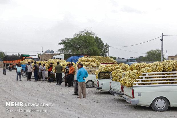لزوم فراهم کردن زمینه های صادرات محصولات کشاورزی از هرمزگان