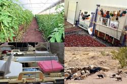 ۱۴۸ میلیارد تومان تسهیلات اشتغال روستایی در مازندران پرداخت شد