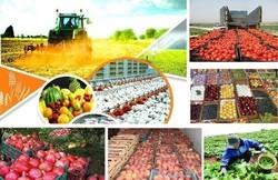 «بازارهای خارجی»رؤیایی که محقق شد/رشد تولیدات کشاورزی استان سمنان