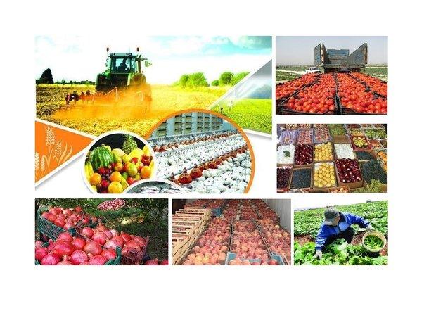 نمایشگاه محصولات کشاورزی و گلخانه ای در یزد برگزار می شود