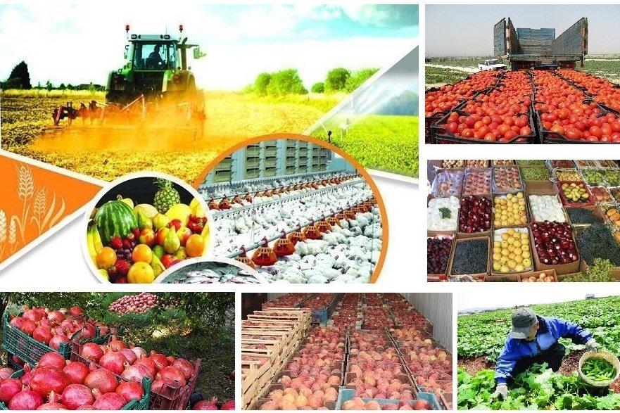 همکاری ۴۴۷ گروه جهادی با وزارت جهاد کشاورزی برای حل مشکلات تولید