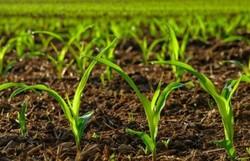 اجرای طرح توسعه کشاورزی در قروه/بهره وری آب با کشت گلخانه ای
