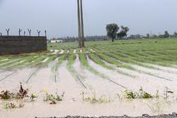 تصرف غیر قانونی رودخانه ها در هشتبندی خسارت میلیاردی به کشاورزان وارد کرده است