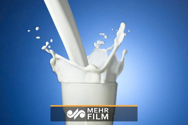 اعتراض دامداران به پایین بودن قیمت شیر