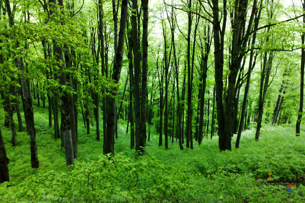 1,250 ha of central Alborz Mountains undergo reforestation