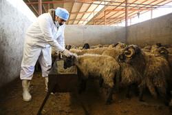 توزیع ۶۶ دستگاه آبشخوار فلزی بهداشتی بین دامداران استان سمنان