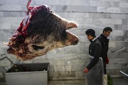 Iran imports sheep from Romania