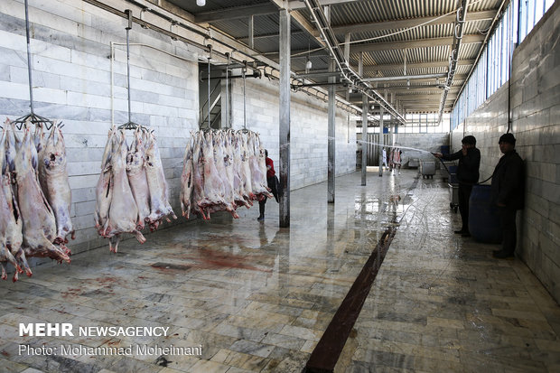 Iran imports sheep from Romania