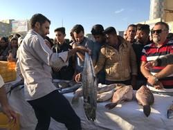 عرضه ماهی قاچاق توقیف شده در بازار