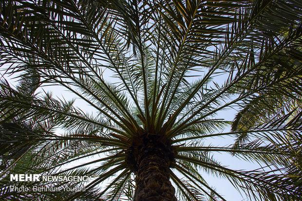 فصل خوب خوزستان