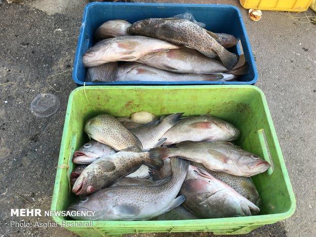 کشف بیش از ۱۰۰۰ کیلوگرم ماهی قاچاق در آبادان
