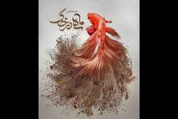 آغاز اجرای نمایش «ماهی در خاک» در کرمان از ۲۸ بهمن