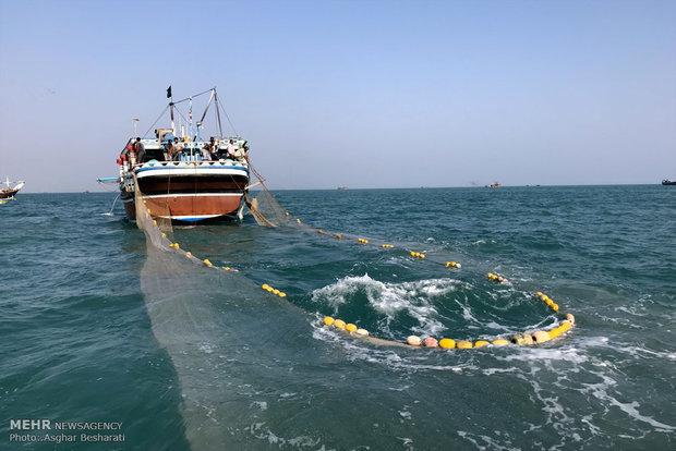 میزان صید میگو در آبهای استان بوشهر ۳۲ درصد افزایش یافت