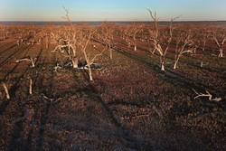 ۸۵۰۰ هکتار از باغات سمیرم در معرض خشکسالی شدید است