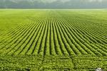 محصولات باغداری,توسعه محصولات باغداری,فناوری نوین