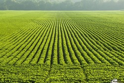 پایش هوشمند اراضی و محصولات کشاورزی با ماهواره