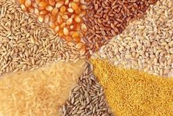 کشف یک تن خوراک طیور قاچاق در قزوین