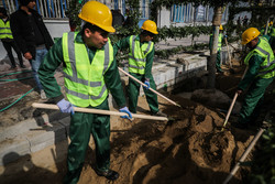 کاشت ۴٠ اصله درخت چنار در بلندترین خیابان مشجر کشور