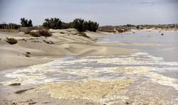 Water drenches 18,000 ha of Hamoun-e Sabori wetland