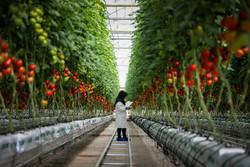 """افتتاح المرحلة الثانية من مشروع """"أكبر دفئية زراعية"""" مجهزة بنظام """"هيدروبونيك"""" في ايران / صور"""