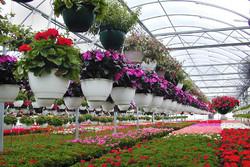 برگزاری نمایشگاه بین المللی گل و گیاه از ۸ اردیبهشت در تهران