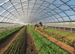 برنامه توسعه ۵۸۰۰ هکتاری گلخانه ها در سال جاری