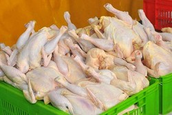 ۴۶۰۰ کیلوگرم گوشت مرغ فاسد در بردسیر ضبط شد