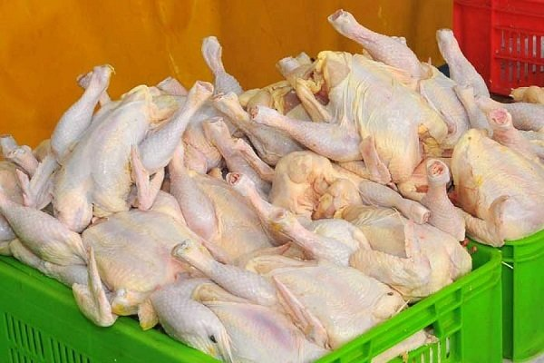 قطعهبندی و طعمدار کردن مرغ ممنوع است