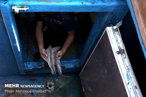 توقیف لنج های صید غیر مجاز در کیش