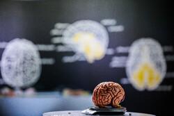 مهمترین دستاوردهای علوم شناختی/ راه اندازی پردیس و انجمنهای مغز و شناخت