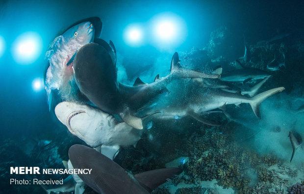 برندگان مسابقه عکاسی در زیر آب