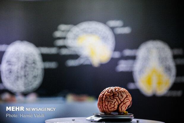 مهمترین دستاوردهای علوم شناختی/ راه اندازی پردیس و انجمنهای مغز
