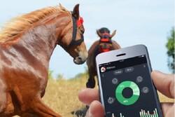 نگهداری اسب با اپلیکیشن هوشمند