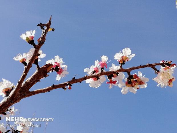 نوید بهار