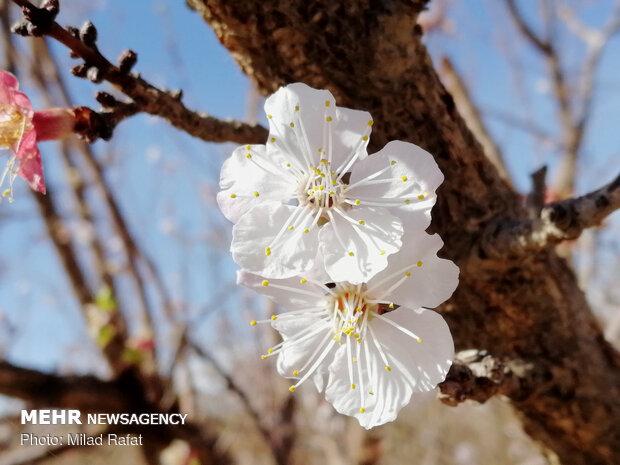 İlkbahar geliyor