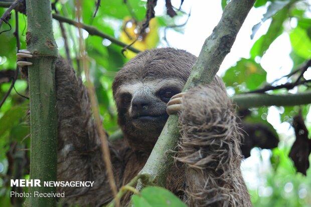 جانداران ساکن آمازون
