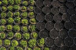 """بلدية """"بجنورد"""" تستقبل الربيع مع 300 الف نبتة /صور"""