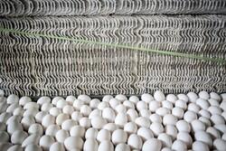 طرح خرید تخم مرغ مازاد همچنان بلاتکلیف/صادرات به عراق متوقف است