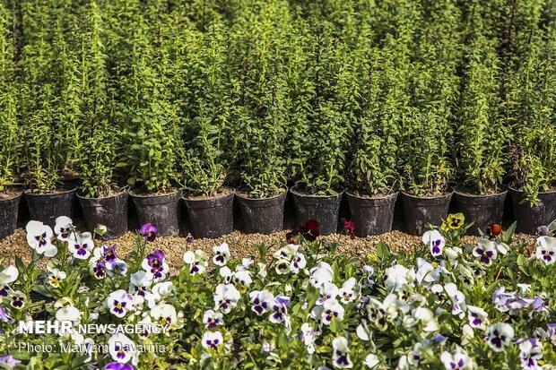 """بلدية """"بجنورد"""" ترحب بالربيع عبر اعداد 300 الف نبتة"""