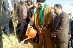 مراسم روز درختکاری در بروجرد برگزار شد