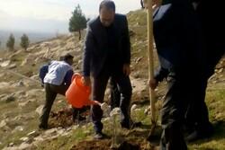 ۷۱ کیلومتر درختکاری از نوکنده تا جنگل گلستان